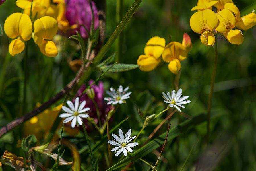 субботний пикник - белые и жёлтые цветы