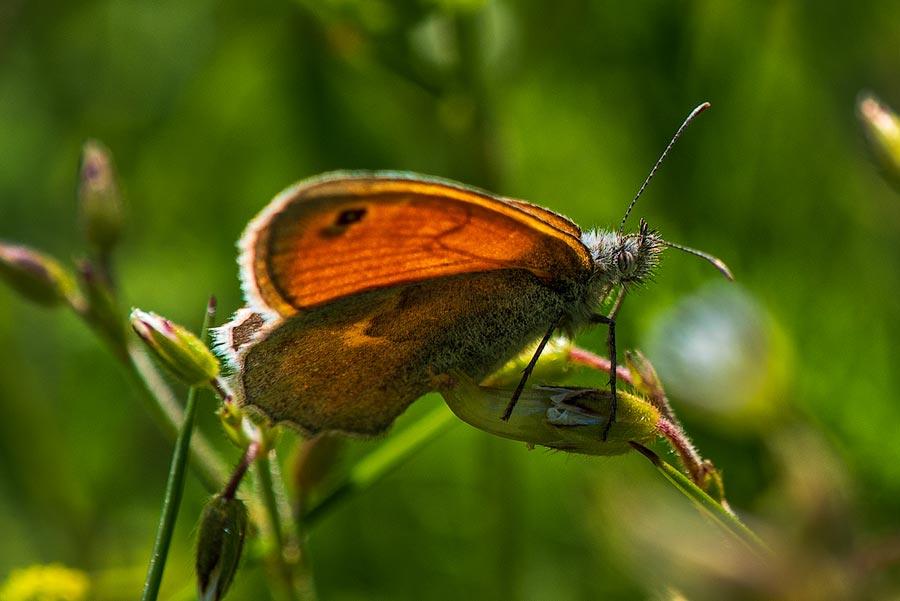 субботний пикник - бабочка