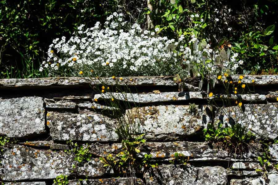 цветы в монастыре Монтеказале