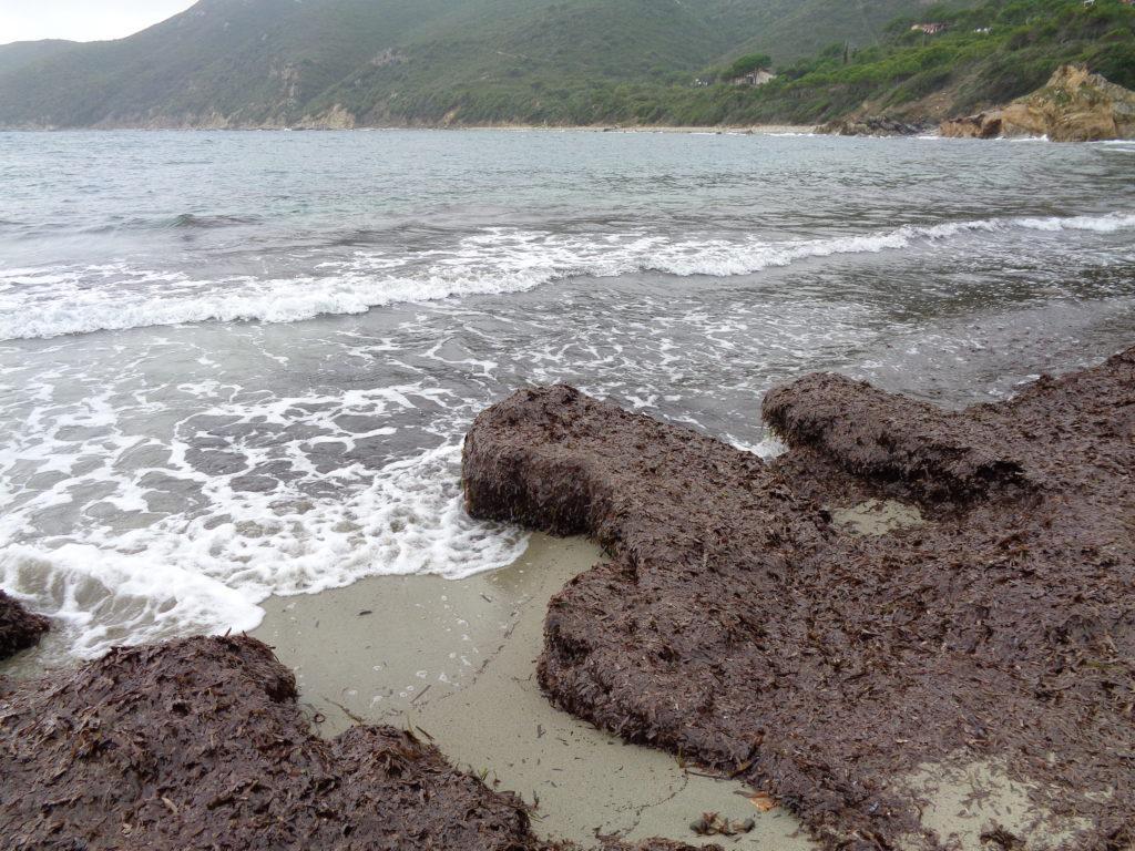 июнь на острове Эльба