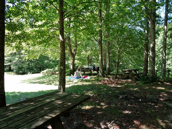 субботний пикник - место