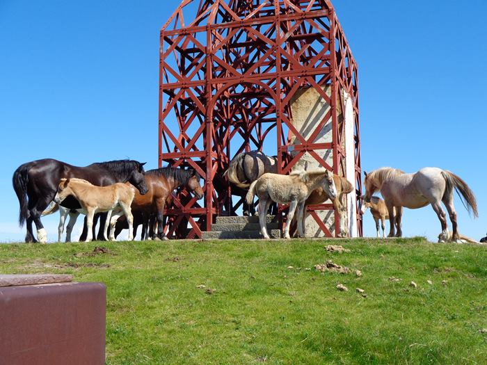 субботний пикник - кони на вершине пратоманьё