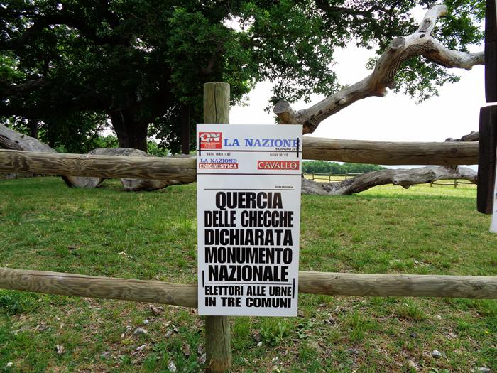 дуб - национальный памятник Италии