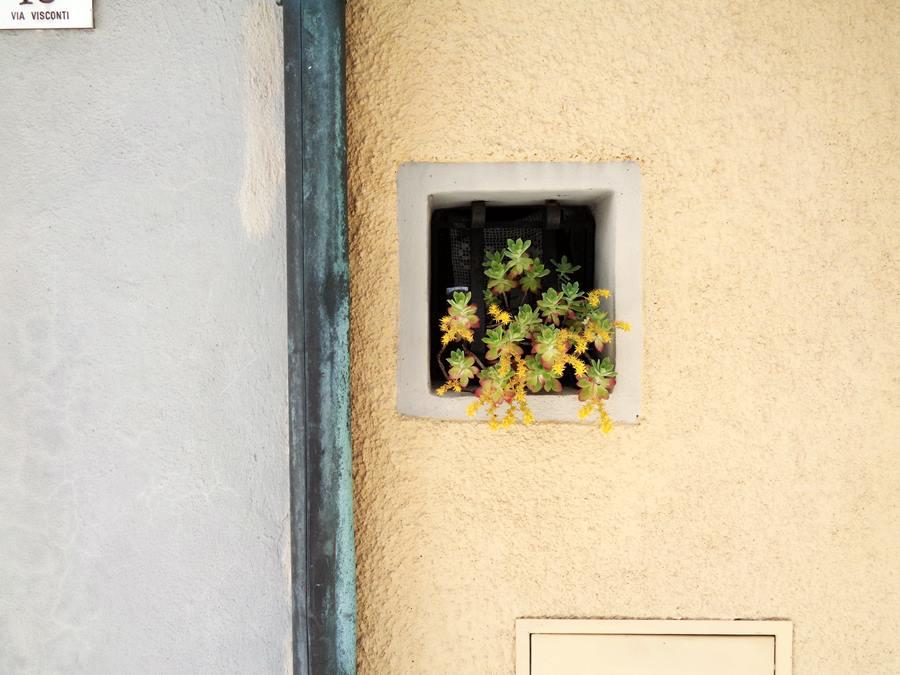 Кампилья д'Орча - цветы
