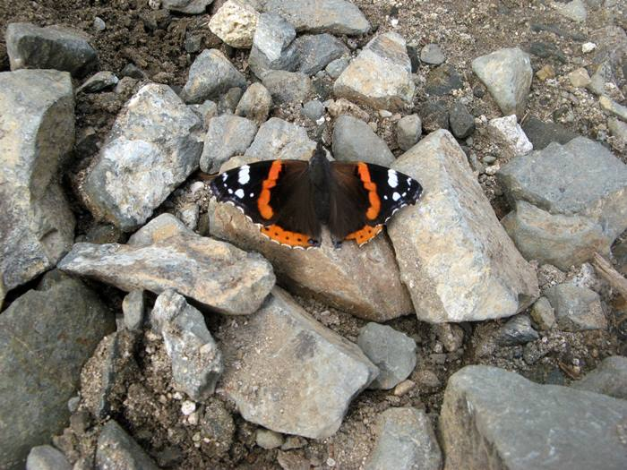 гора пероне - бабочка