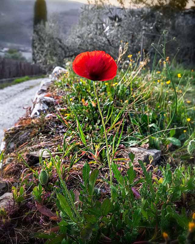 вылет в италию из москвы: весна в Тоскане