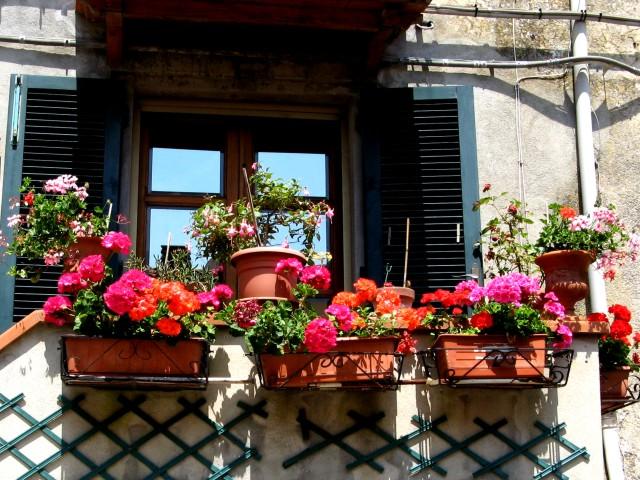 цветы-в-марчане-cvety-v-marchane