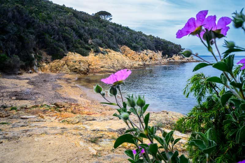 цветы весной на пляже Петричоло