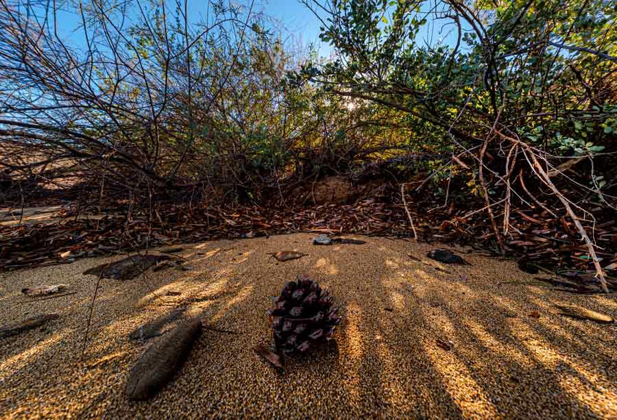 шишка на пляже Галензана