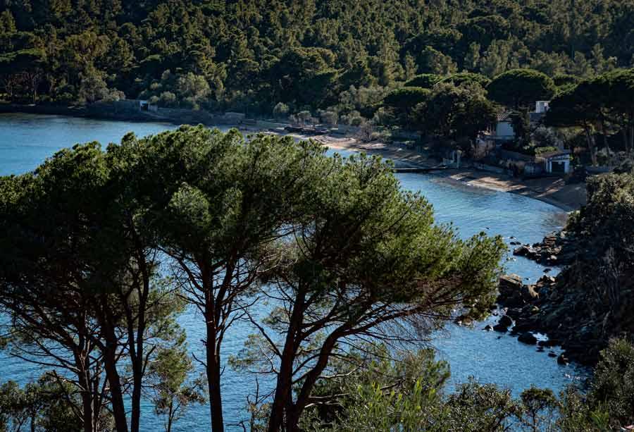 море и хвойные в районе пляжа Галензано
