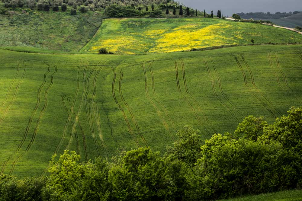 холмы в Тоскане