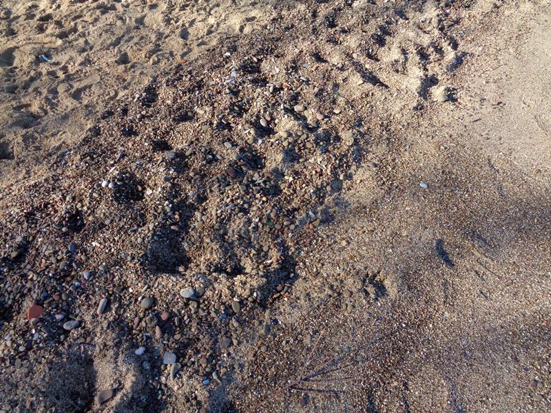 песок на пляже Галензана