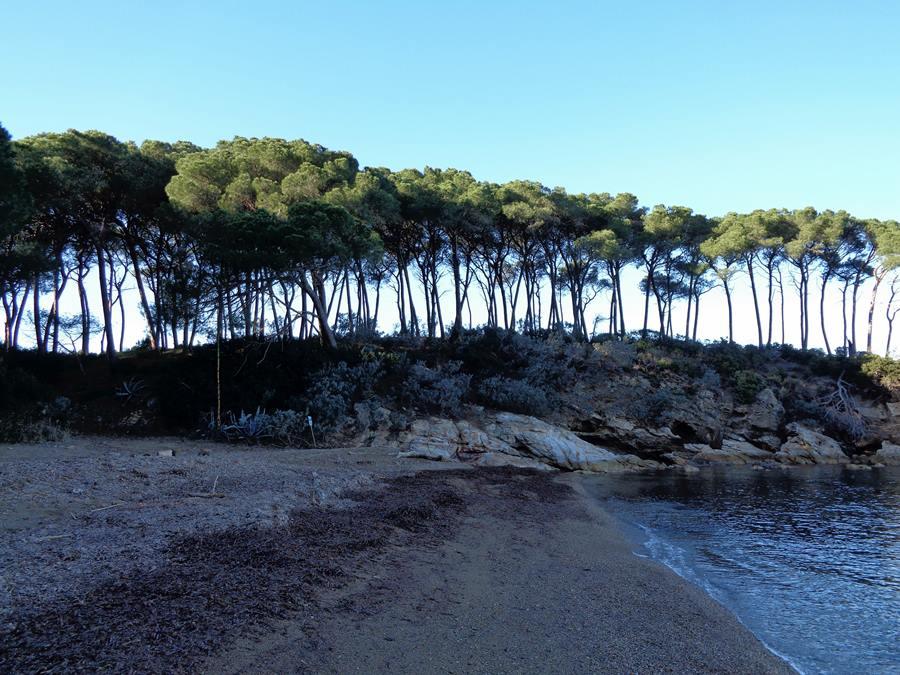 хвойные на пляже Истия