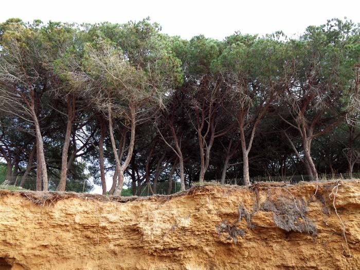 пляж Мадонна делле Грацие - хвойные деревья