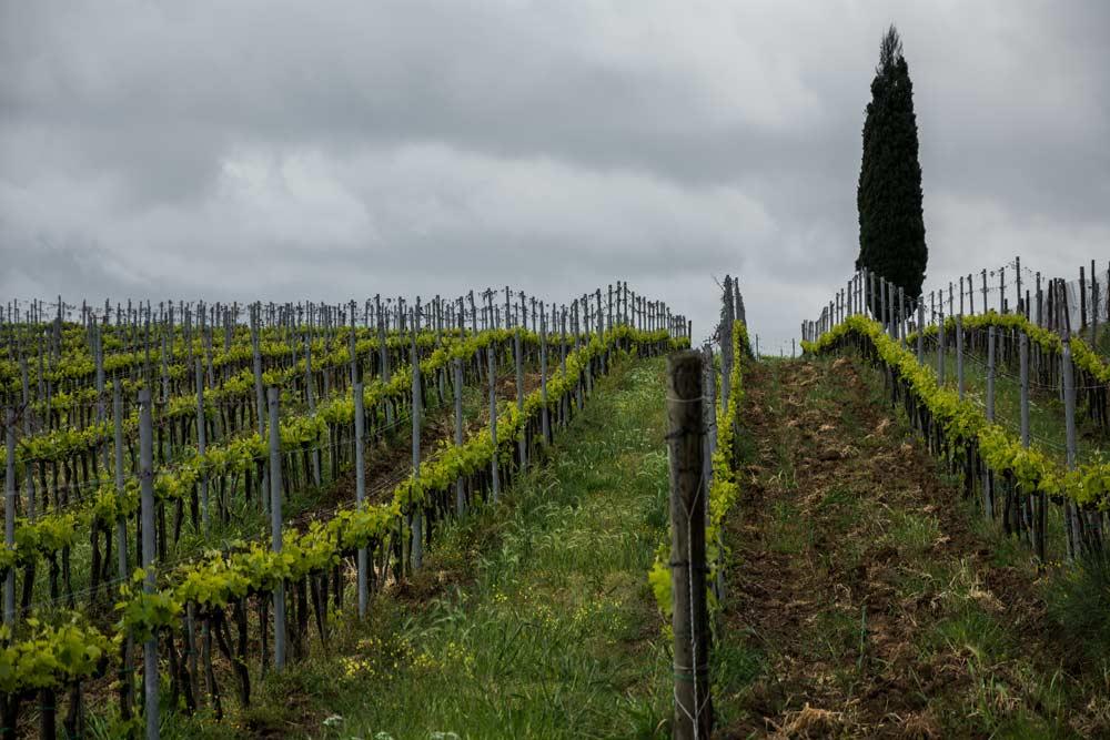 виноградники в Кьянти