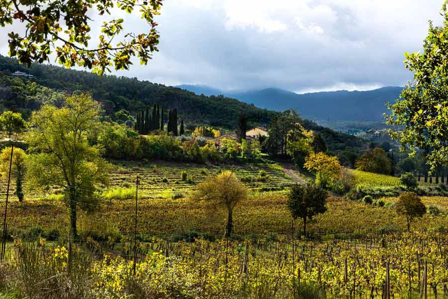 холмы в районе Ареццо