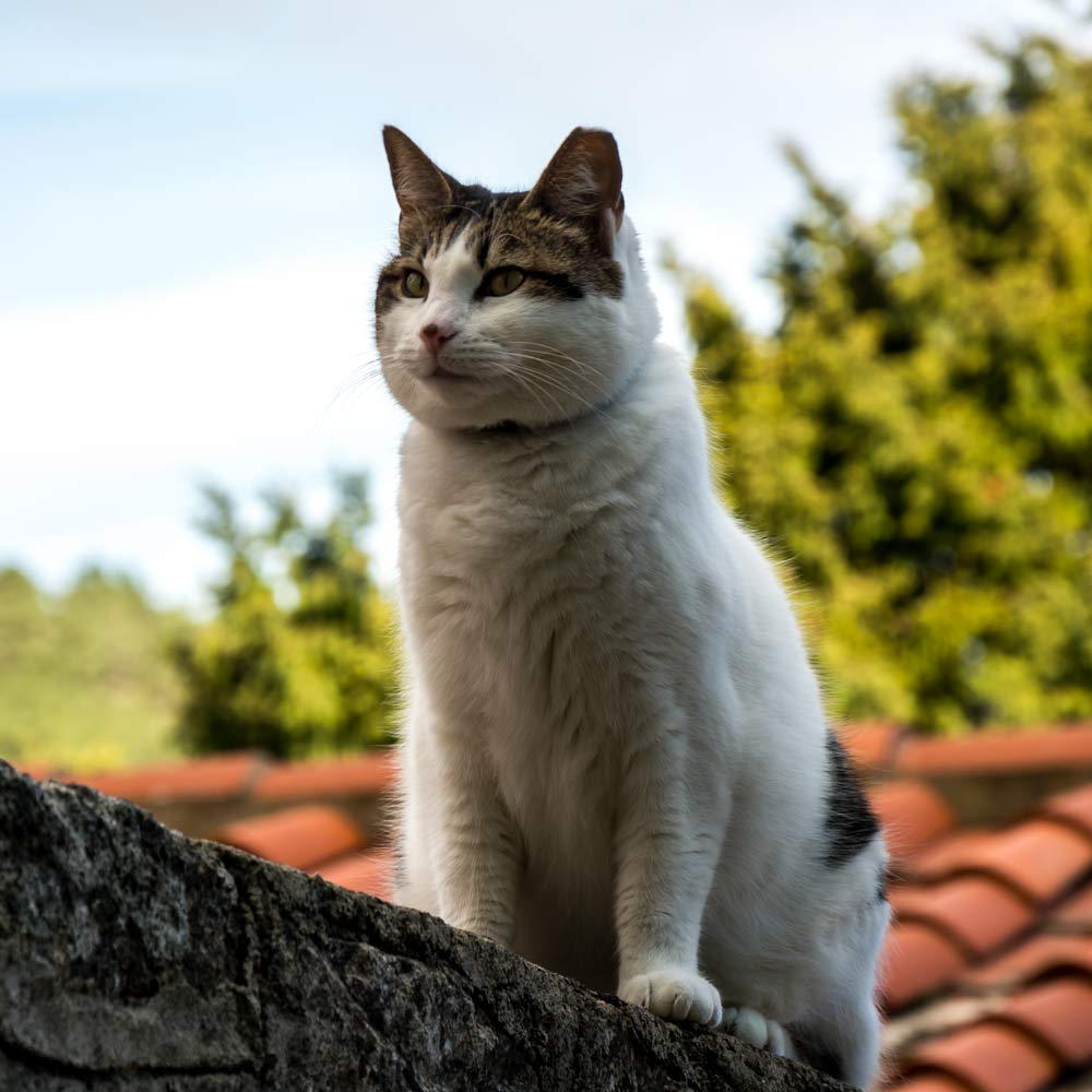 кот из Марчаны на Эльбе
