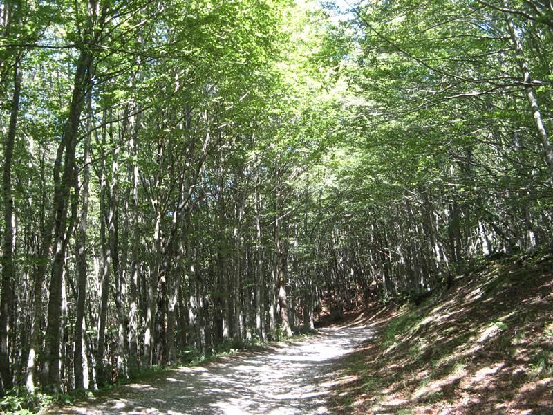 желанная тень в лесу