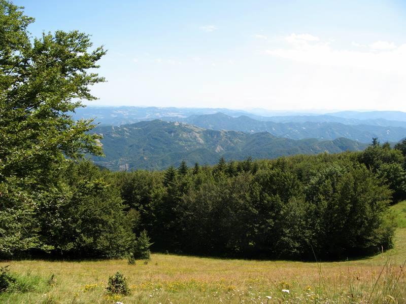 лесная поляна в Тоскане