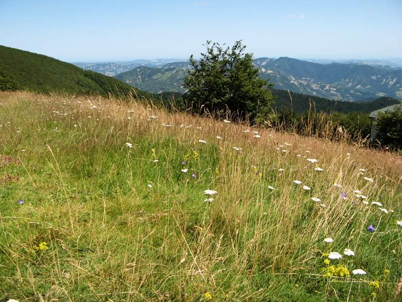 цветы и травы на лугу в Тоскане