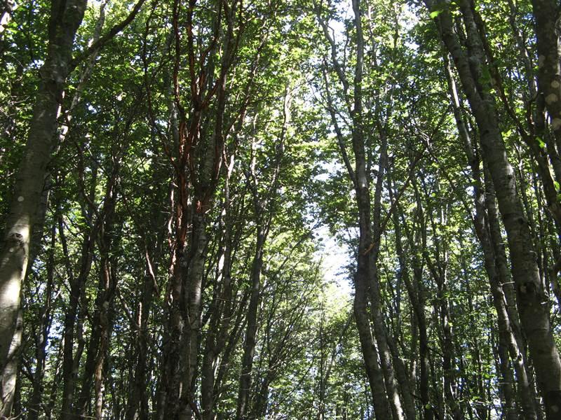 деревья в лесу Тосканы