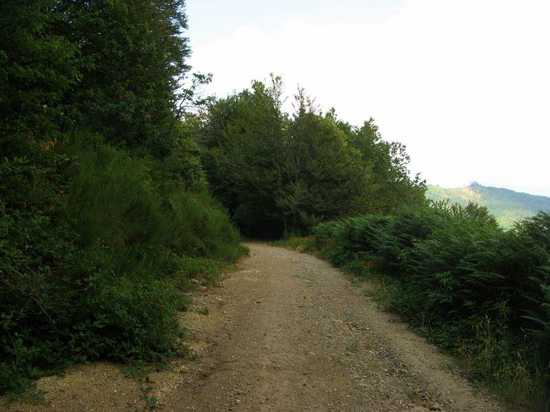 Дорога в Тоскане