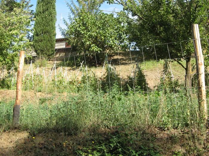 вид на огород в Тоскане в сентябре