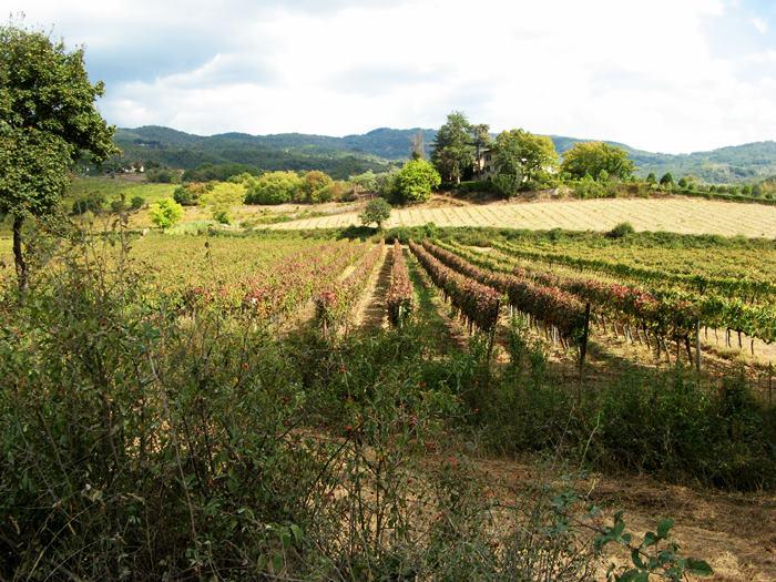 октябрь в Тоскане - виноградник краснеет