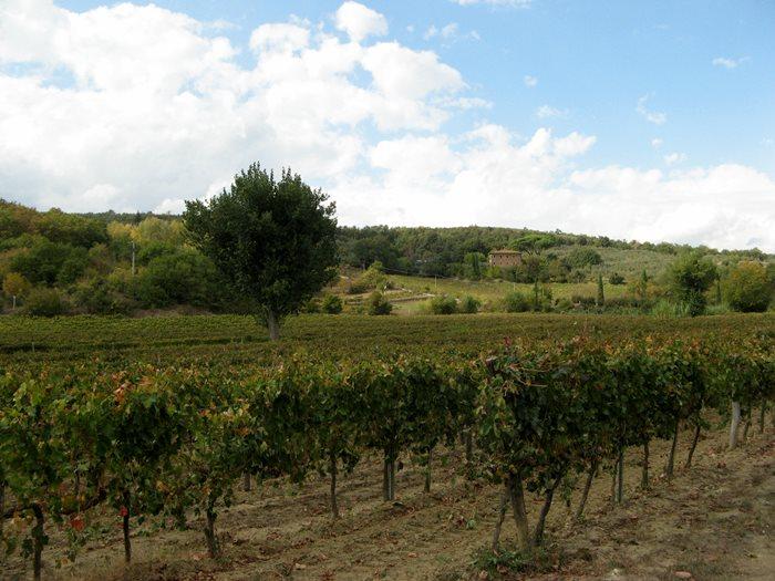 Тоскана в октябре - виноград убрали