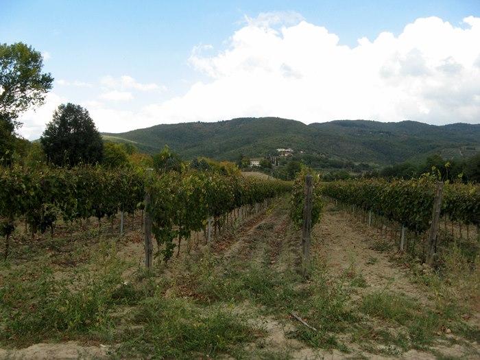 Тоскана в октябре - виноград на вино