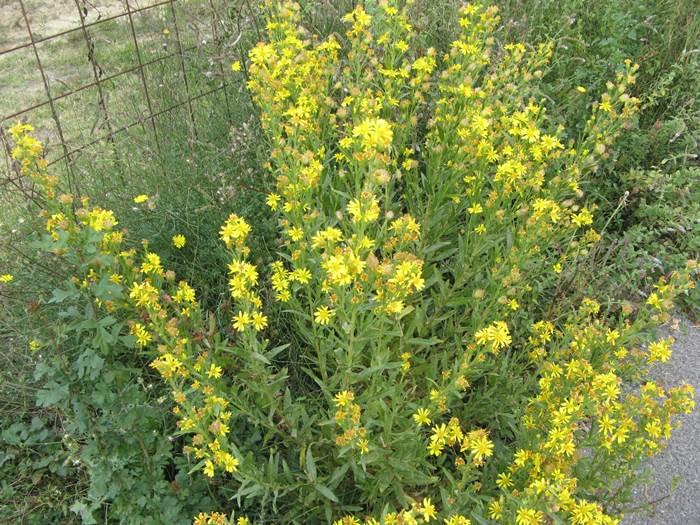 Октябрь в Тоскане - полевые цветы