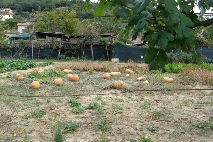 Тоскана в октябре - тыква