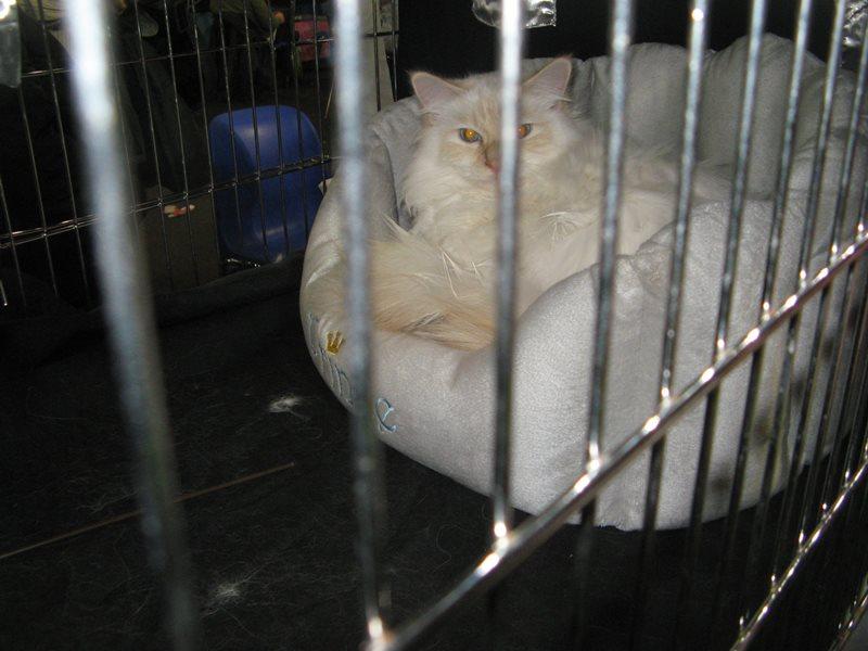 подложка для кошки на выствке