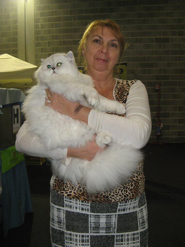 хозяйка кошки с ней на выствке