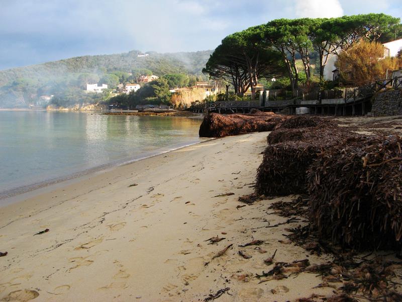 водоросли на песочном пляже на Эльбе