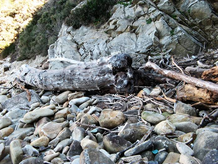 брёвна на пляже Рипа Барата