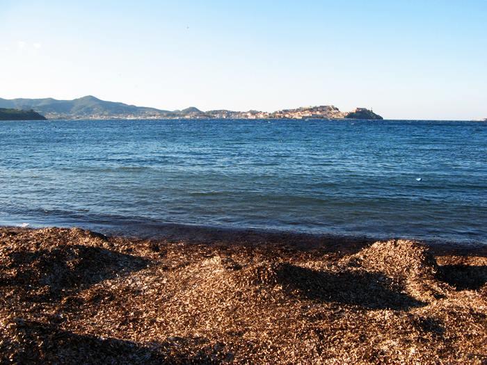 водоросли на пляже Магадзини