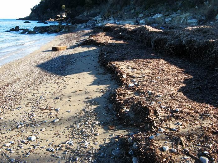 водоросли на пляже Фругозо после шторма