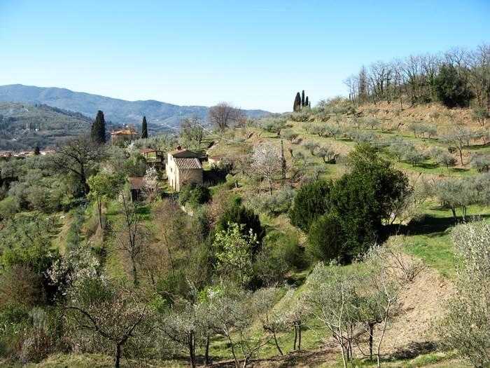 вид сверху на оливковую рощу