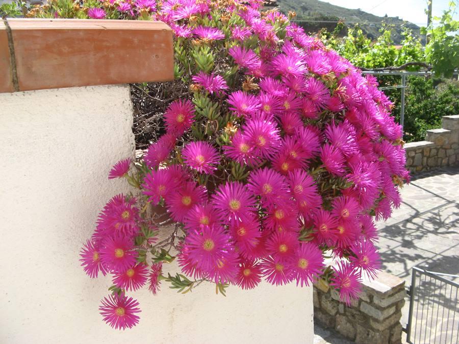 цветение в мае на Эльбе
