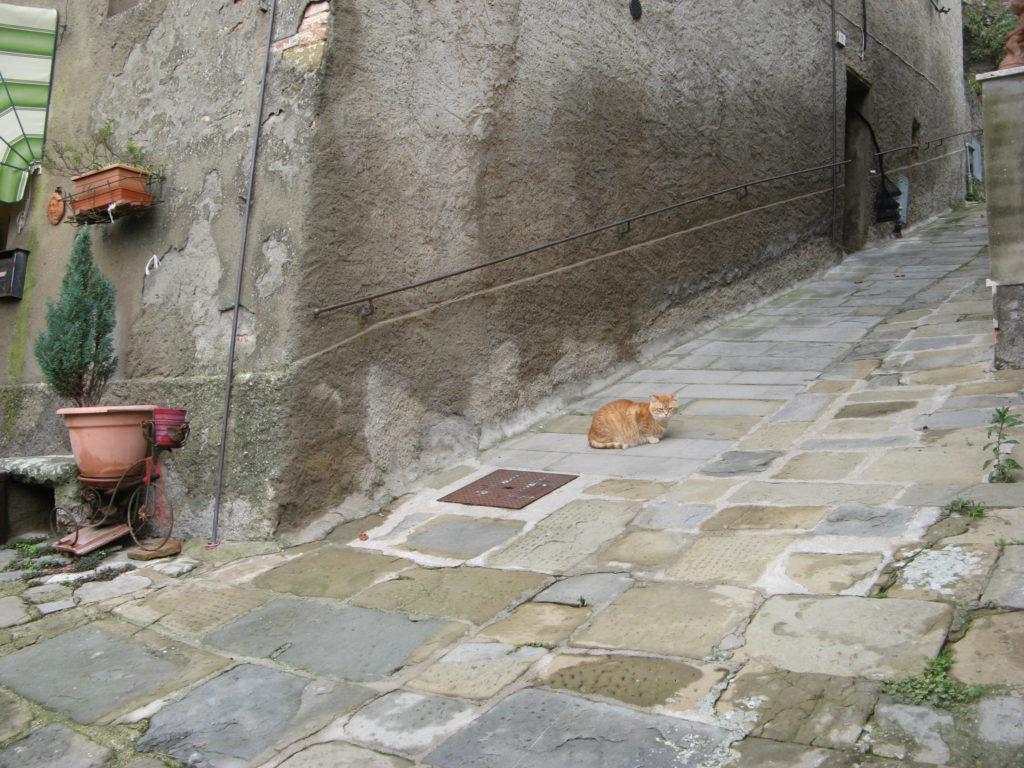 кошка в Скрофиано