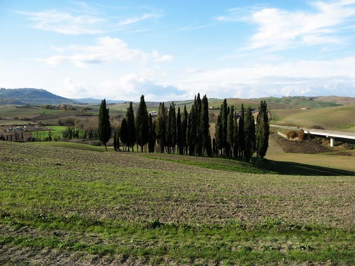 кипарисы в Тоскане, Италия