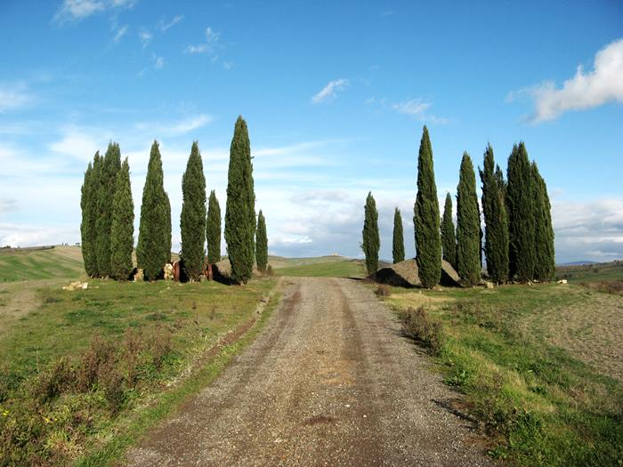 тосканские кипарисы