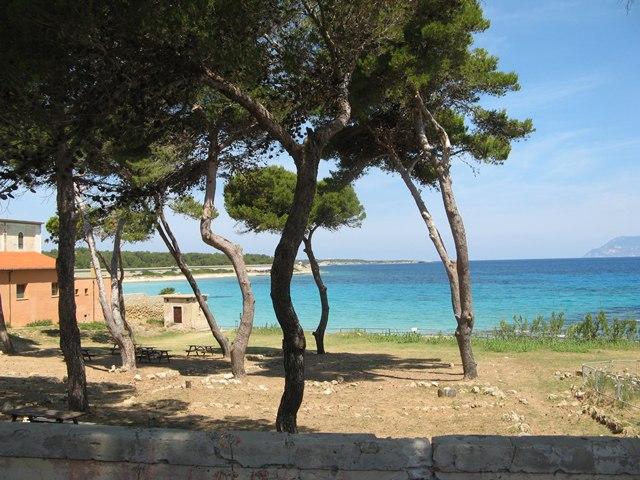 состовые деревья на острове Пьяноза