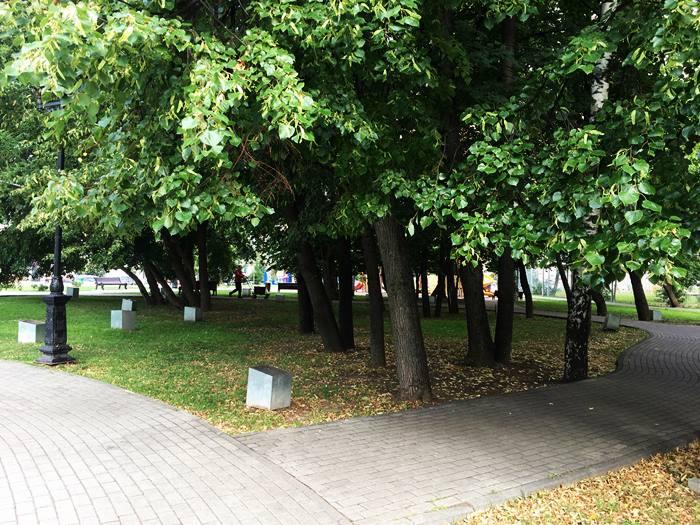 ландшафный дизайн - группа старых деревьев