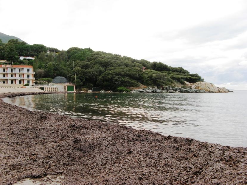 водоросли на пляже