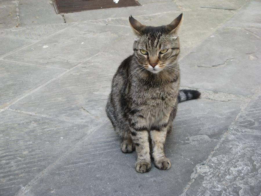 Кот из Лучиньяно