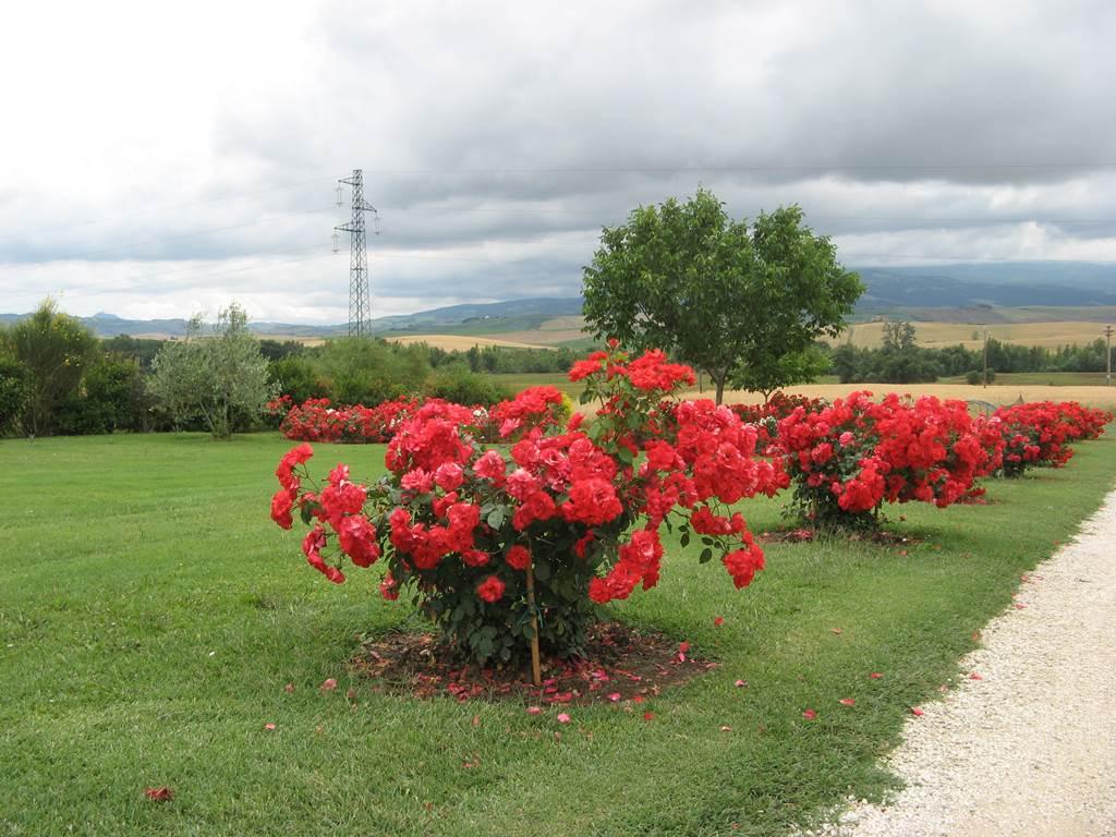 Летнее цветение в Тоскане