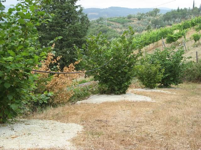 Место для культивации чёрного трюфеля в Тоскане