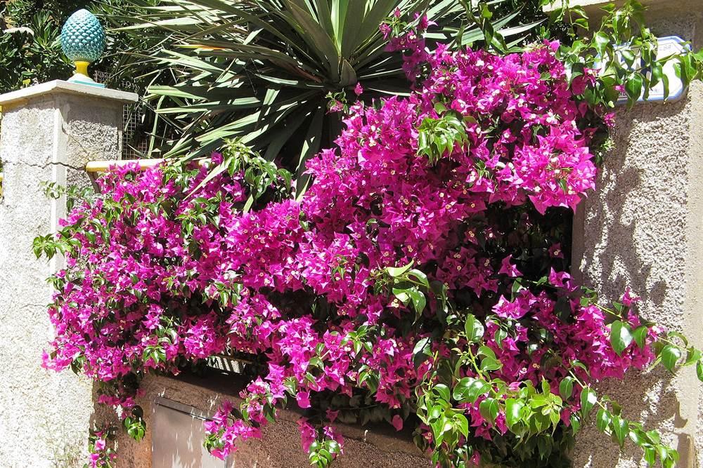 Цветы в Марина ди Кампо
